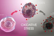 Photo of استرس اکسیداتیو چیست و چه تاثیری بر روی سلول خواهد گذاشت