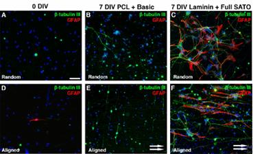 تغییرات در موفولوژی سلول ها