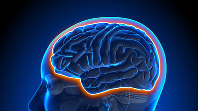 Photo of تشخیص Dyslexia و مناطق مغزی مؤثر بر آن با پردازش سیگنالهای مغزی